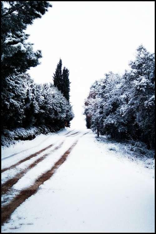 Snow Nevada Snowy Road Trees Winter Landscape