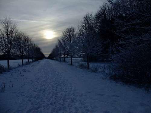 Snow Wintry Backlighting Mystical Gloomy