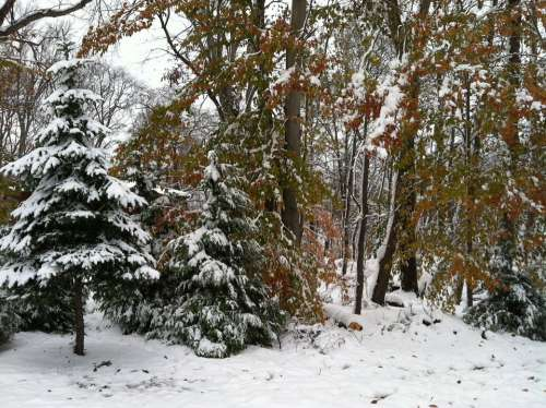 Snow Trees Winter Cold Nature Landscape