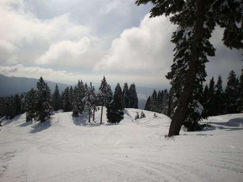 Snow Ski Hill Ski Run Winter Winter Sports Nature