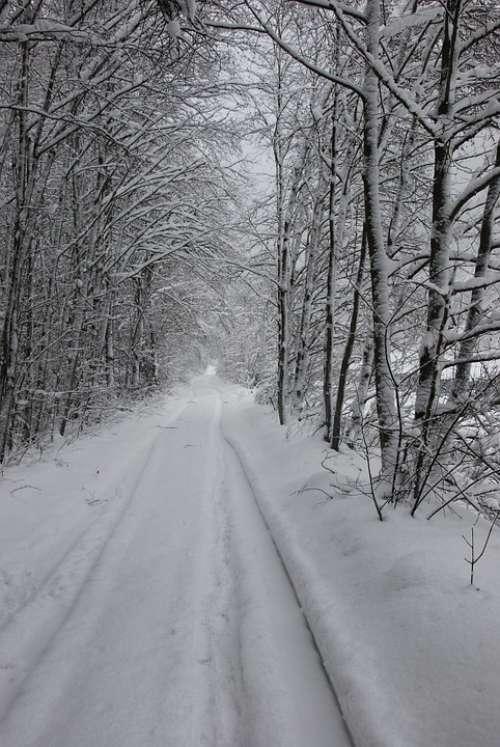 Snow Snow Tracks Tire Tracks Away Snowy