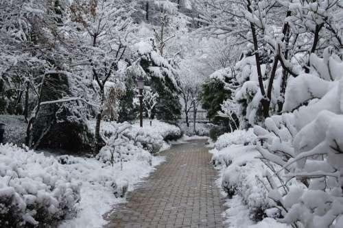 Snow Snow Flower Winter Trail