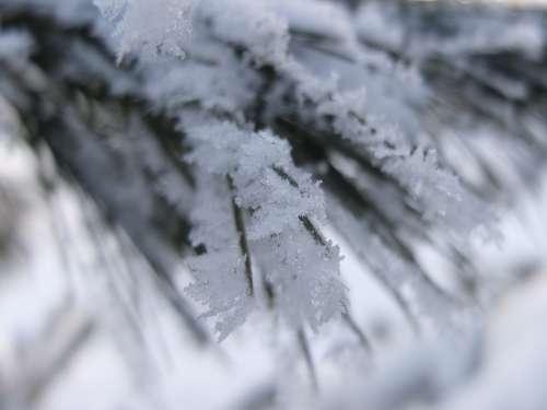 Snow Winter Fir Tree Snowy Wintry Winter Magic