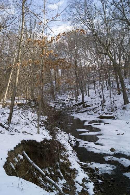 Snow Park Trees Baltimore Waverly Park Creek Ice