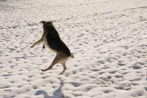 Snow Dog Winter White Animal