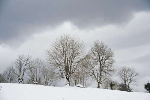 Snow Trees Nature Tree White