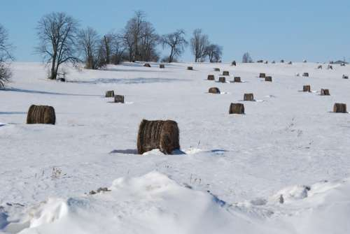 Snow Cold Trees Winter Nature Weather Hay