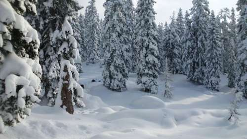 Snow Winter Forest Mountains Wintry Winter Magic