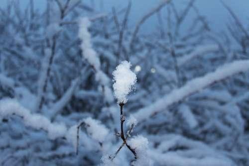 Snow Snowflake Cold Tree Winter White Blue