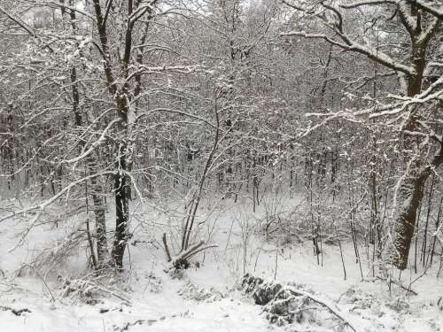 Snow Forest Snow Landscape Winter Holland