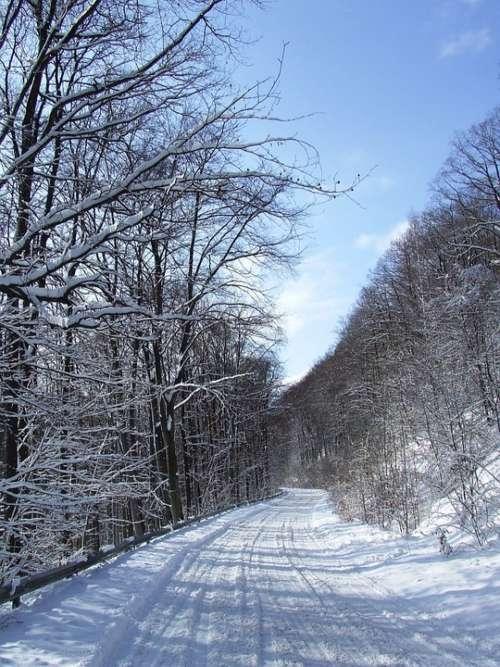 Snow Winter Beech Mountain Snowy Road Sunlight
