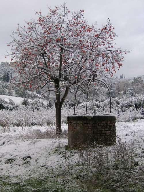 Snow Tree Winter Cold Pozzo