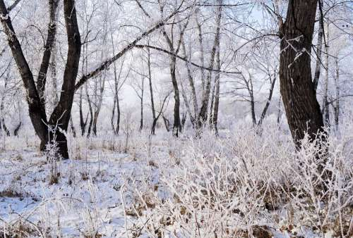 Snow Frost Landscape Nature Trees Forest