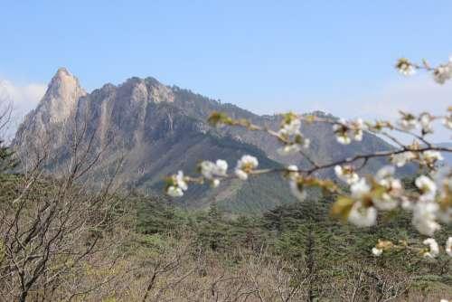 Sokcho Mt Seoraksan Peaks