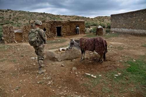 Soldier Calf Farmland Farm Cow Us Army