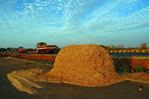 Sorghum Chaff Jowar Bagasse Fodder Crop Residue