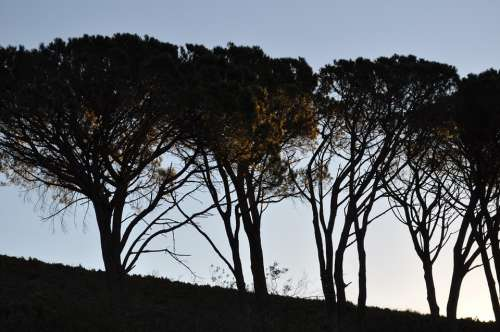South Africa Trees Avenue