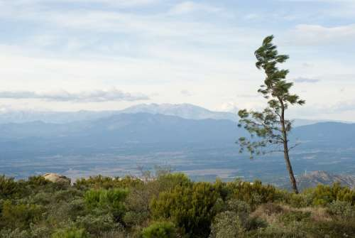 Spain Tree Mountains Nature Spring Land Day Wind