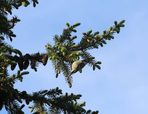 Sparrow Sperling Bird Birds