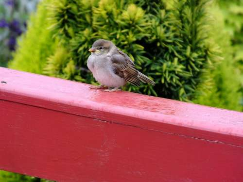 Sparrow Bird Balcony