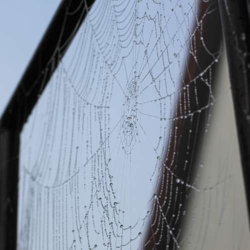 Spider Web Cobweb Dew Autumn Fog