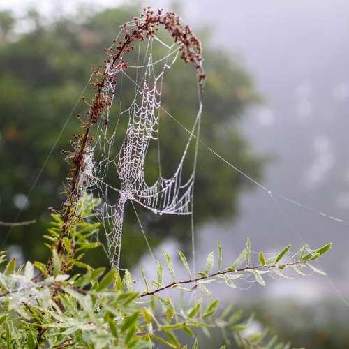 Spider Web Cobweb Dew Autumn Fog