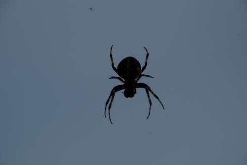 Spider Spider With Prey Creepy Threatening Lurking