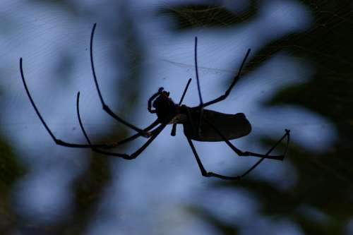 Spider Creepy Insect Spiderweb Dark Scary Black