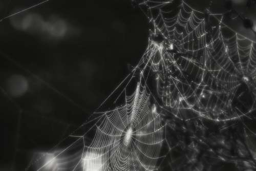 Spider Web Cobweb Insect Creepy Black And White