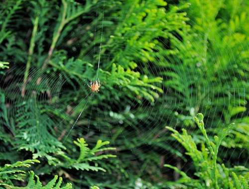 Spider Cobweb Nature