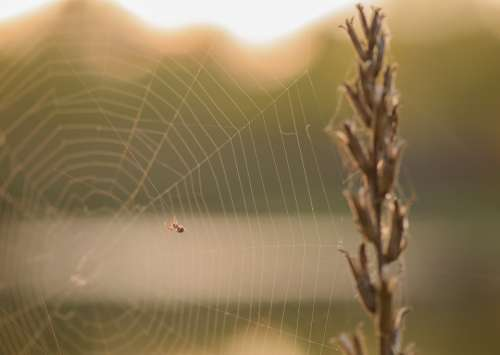 Spider Web Nature Summer Lawn Life Insects
