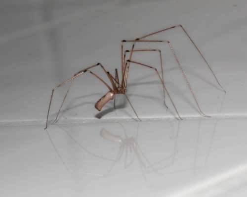 Spider Arachnids Legs Insect Arachne