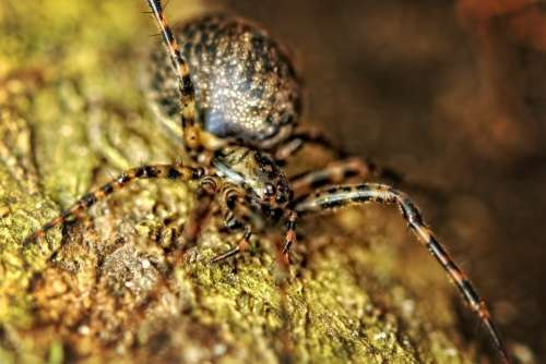 Spider Close Up Nature Macro Insect Yellow
