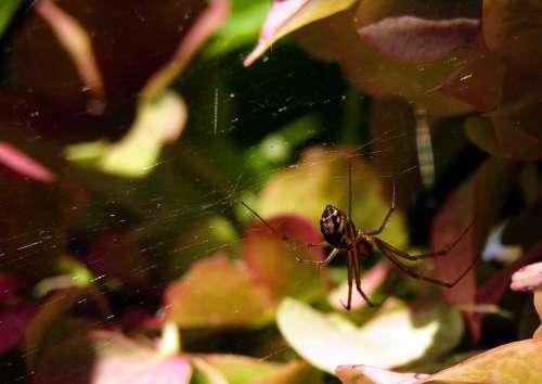 Spider Web Flowers Nature Hydrangeas Colors