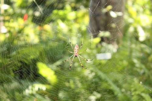 Spider Insect Nature Isolated Bug Danger Web