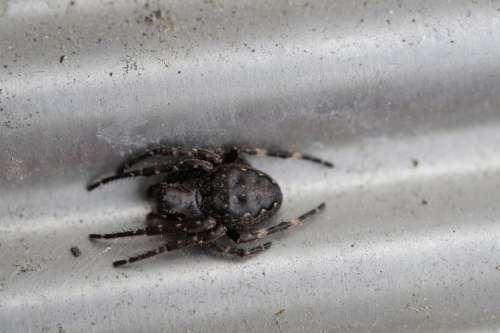 Spider Lurking Arachnid Macro Arachnida Legs