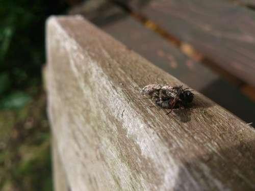 Spider Prey Caught