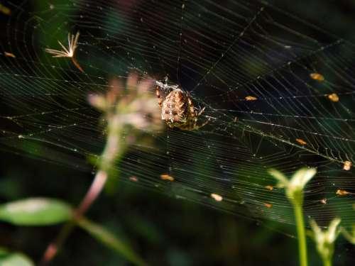Spider Web Crusader Macro Garden