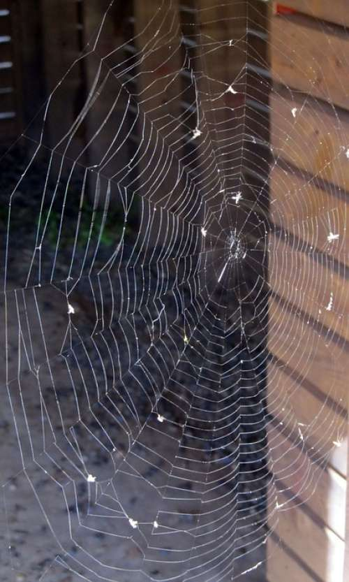 Spider Web Spiderweb Spider Web Thread Arachnid