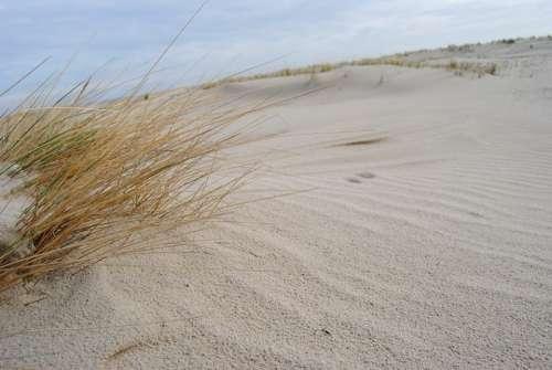 Spiekeroog Dunes North Sea Beach Grass Beach Sand