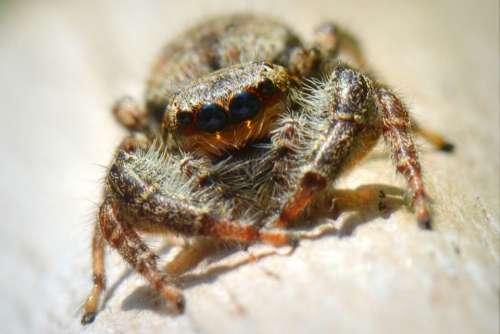 Spin Bug Animal Macro