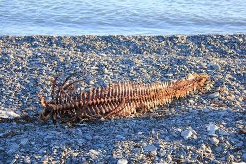 Spine Ben Skeletal Seal