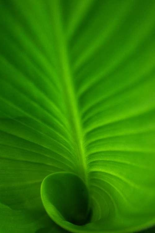 Spiral Spiral Leaf Green Green Leaf