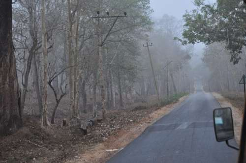Spooky Mystic Mist Fog Road Forest Mysterious