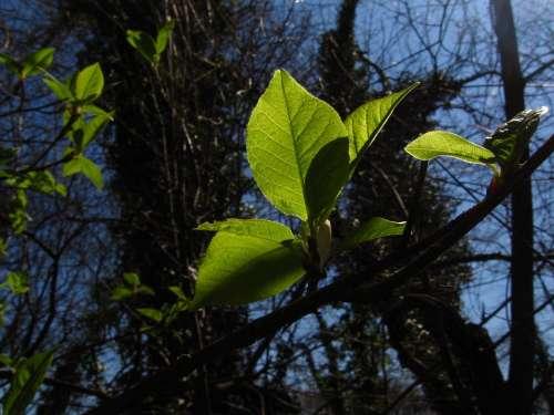 Spring Wood Foliage