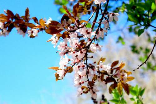 Spring Flower Signs Of Spring Garden Blossom Bloom