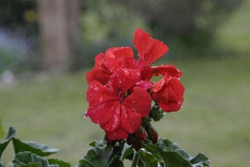 Spring Public Record Flora Rain Raindrop Flowers