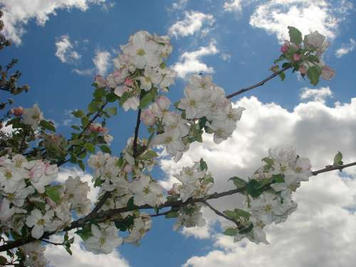 Spring Flowers Sunshine Blue Sky Clouds White