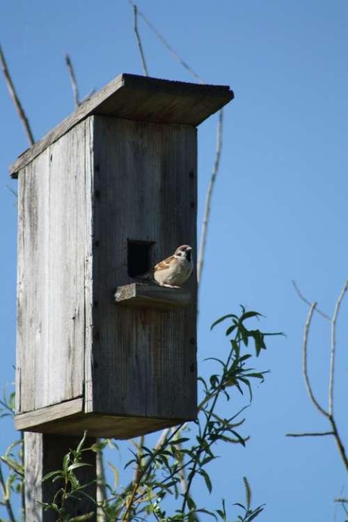 Spring Nature Birdhouse Sparrow Bird Against Sky