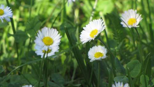 Spring Flowers White Flourishing The Petals Nature